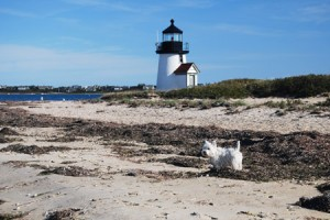 Fala II exploring at Brant Point Lighthouse