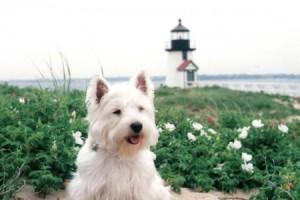 Fala 1, Nantucket